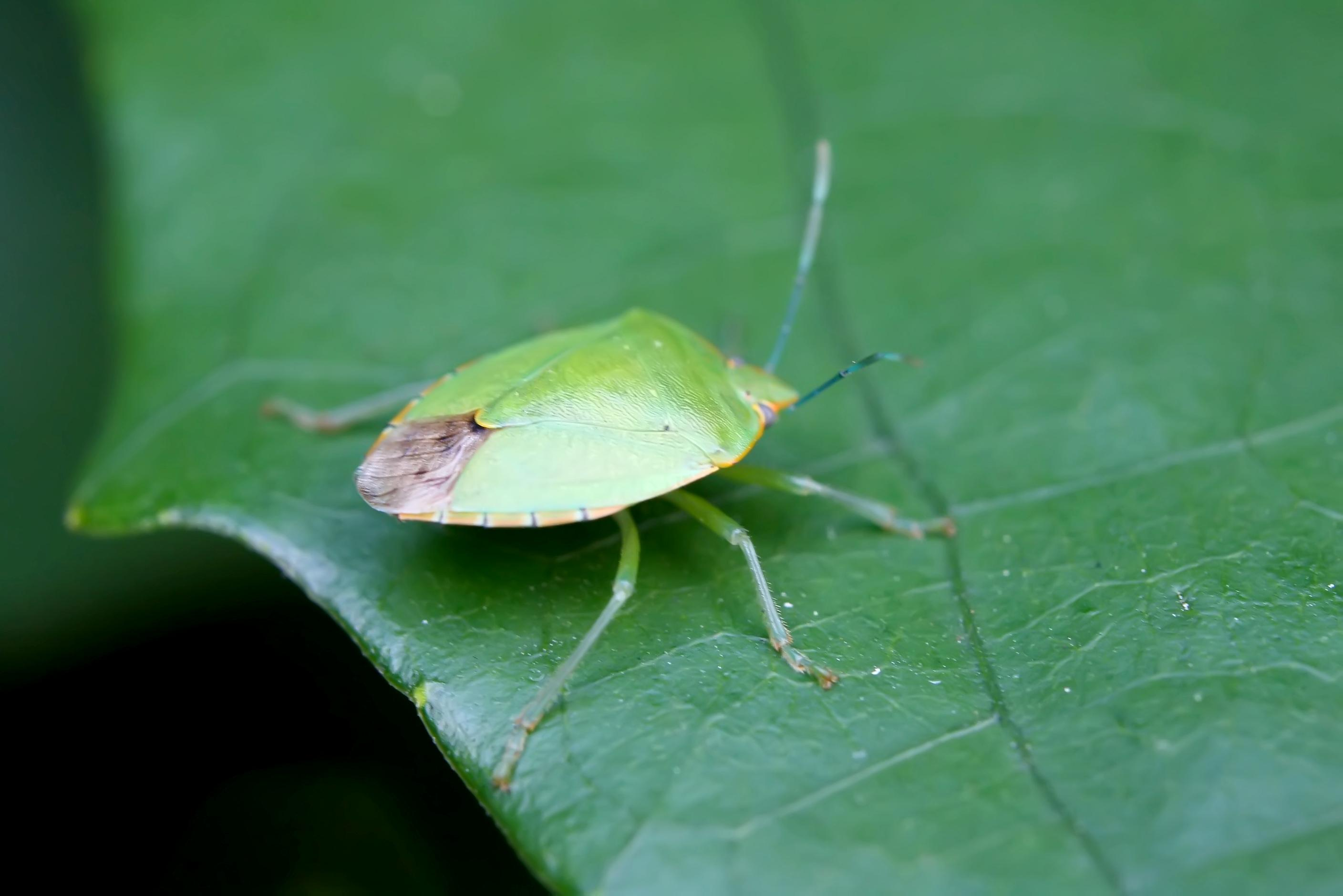 dealing with garden pests