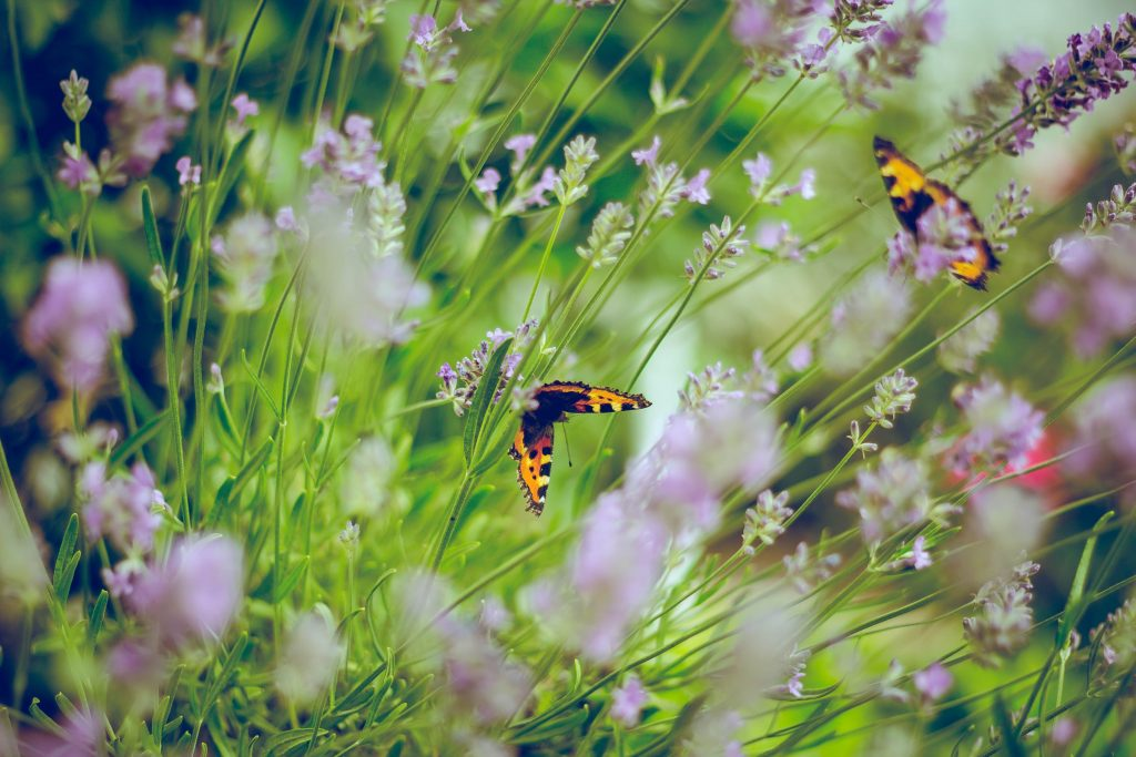 Plan your Summer Garden for Pollinators